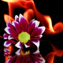 fire and flowers