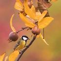 Pestrá paleta barev odeznělého podzimu