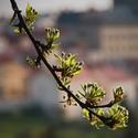 Nesmělé ťukání jara ...