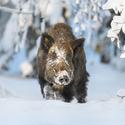 letošní zima v přírodě (22)