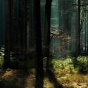 Lesní zátiší III