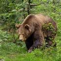 obrázky z Bavorského lesa (9)