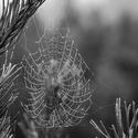 Pavoukova práce ozdobená rosou