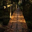 Lesní prosvítání