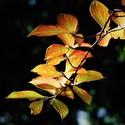 Podzimní větvička