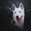 Modrý portrét