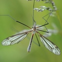Ze života hmyzu :-)