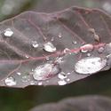 ..je po dešti..