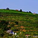 Rakouské vinice