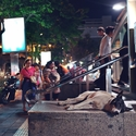 pes bez domova