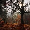 Až opadá listí z dubu...