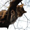 Kočičí nadhled