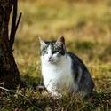 Pouliční kočka