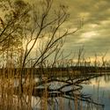 Jistebnický rybník