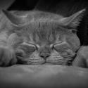 Spící