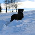 pejsek ve sněhu