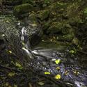 Dubický potok