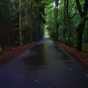 Les u Františkových Lázní