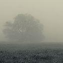 mlha pod Bukovou horou