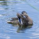 Stydlivý duck face ;)