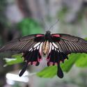 Motýl přistává