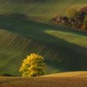 Moravian Toscana