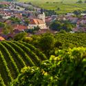 Poklad mezi vinohrady
