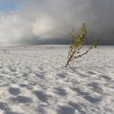 Na sněhové pláni