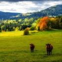 podzimní pastva