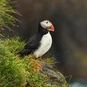 obrázky z islandské přírody (42)