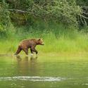 obrázky z přírody Severní Ameriky (17)