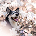 Jaro je radost