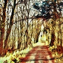 Cesta lesem fantazie