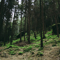 Les u Pravčické skály ;)