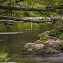 Divoká příroda