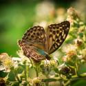 Pestrobarevná motýlí metamorfóza