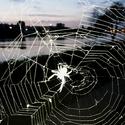 Vyblejsknutý pavouk na Veslařském ostrově