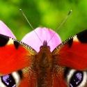 Motýlí krása