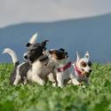 terrier gang :-)