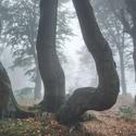 Mlhavé Krušnohoří