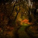 Cesta stínů
