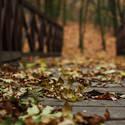 Podzim.
