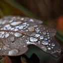 Dešťové korálky