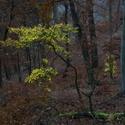 Poslední pozdrav  podzimu