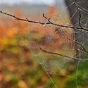 Pavučinka v barvách podzimu