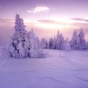 Zasněžené ráno na Šumavě