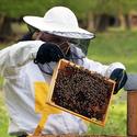 Kontrola včelstva