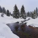 Hamerský potok u lávky