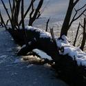 Na zamrzlém rybníku