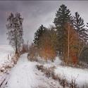 Cesta z  Pavlišova.